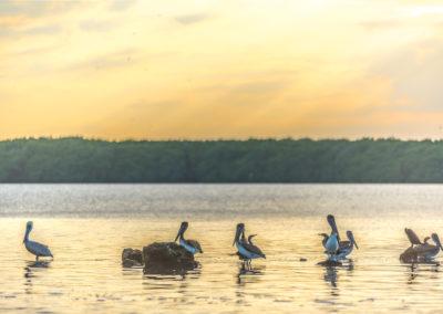 nature_thumbnail